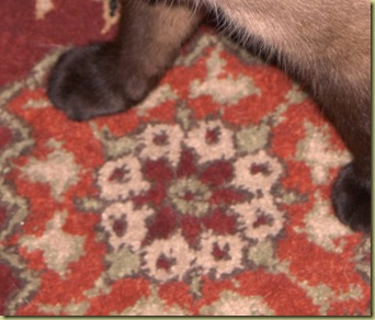 cat feet on a rust colored rug