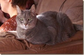 PICT0055montycouchcropped