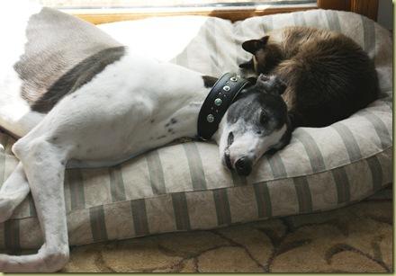 Scooter and Vinni sleep