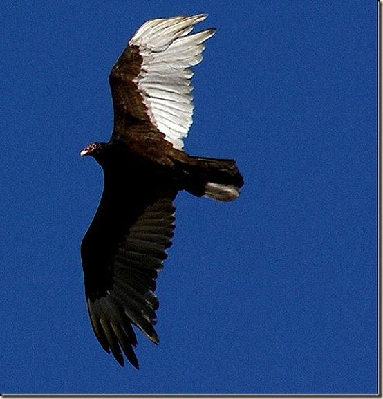 soaring2