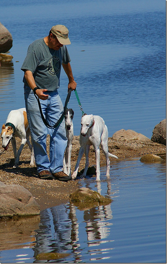 Weekend Reflections - hounds and Bruce