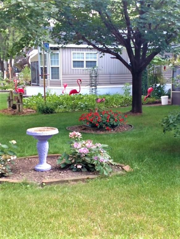 neighbor's garden 7.31.18.jpg