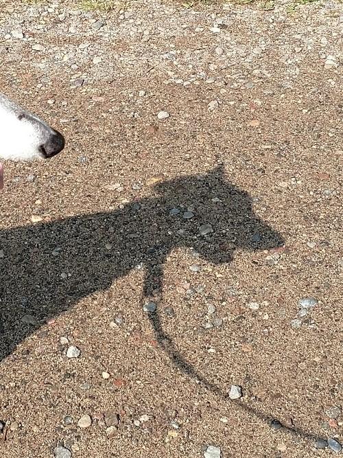 Mandy's shadow 8.1.18.jpg