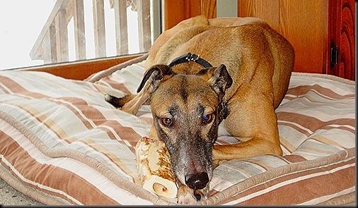 2010 12 24 - 30 Christmas and Dogs 226_thumb[3].jpg