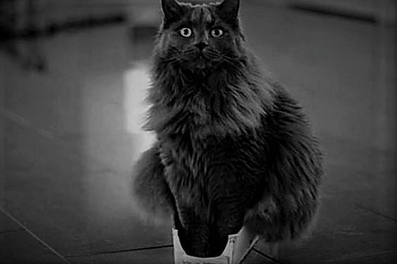 cat in small box.jpg