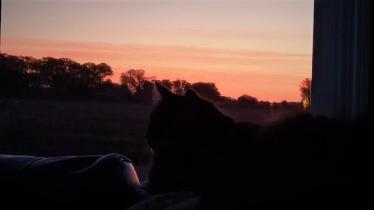 Fidget watches the sunrise 10.9.19.jpg